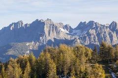 Floresta da montanha com um helicóptero fotos de stock