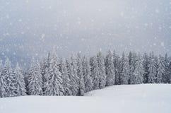 Floresta da montanha no inverno Imagens de Stock Royalty Free