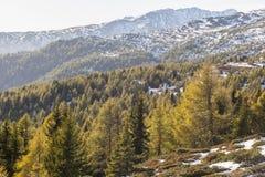 Floresta da montanha no outono imagens de stock