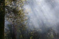 Floresta da névoa Fotografia de Stock Royalty Free
