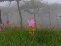 Floresta da névoa Imagem de Stock Royalty Free