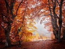 Floresta da névoa do outono Fotos de Stock Royalty Free