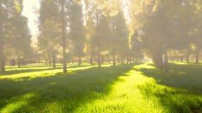 Floresta da névoa na manhã nevoenta fotos de stock royalty free