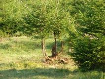 Floresta da natureza Fotografia de Stock