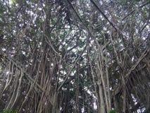 Floresta da natureza da beleza imagens de stock