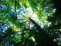 Floresta da natureza do céu da folha da árvore Fotos de Stock Royalty Free