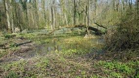 Floresta da natureza em seu melhor Fotografia de Stock