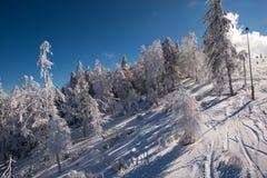 Floresta da neve Fotografia de Stock Royalty Free