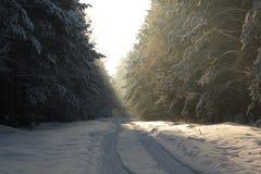 Floresta da neve com luz do sol Fotografia de Stock