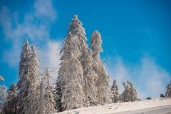 Floresta da neve da montanha imagens de stock