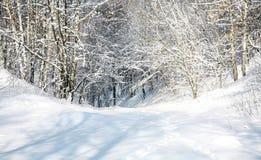 Floresta da neve de abril Fotografia de Stock Royalty Free