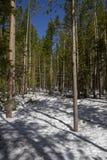 Floresta da neve dentro de Yellowstone fotos de stock royalty free