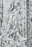 Floresta da neve do inverno na exploração agrícola finlandesa de Saami em Rovaniemi foto de stock