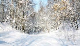 Floresta da neve em abril Foto de Stock Royalty Free