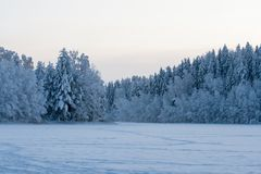 Floresta da neve no inverno Foto de Stock
