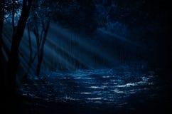 Floresta da noite fotos de stock royalty free