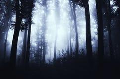 Floresta da noite com névoa azul misteriosa Imagens de Stock