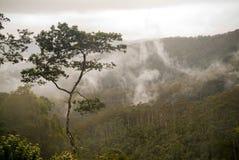 Floresta da nuvem Fotografia de Stock Royalty Free