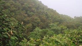 Floresta da nuvem de Reserva Biologica Bosque Nuboso Monteverde video estoque