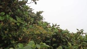 Floresta da nuvem de Reserva Biologica Bosque Nuboso Monteverde filme