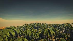 Floresta 1 da palma imagens de stock