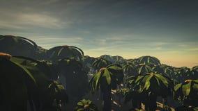 Floresta 3 da palma Fotografia de Stock