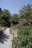 Floresta da palma na Creta Fotos de Stock Royalty Free