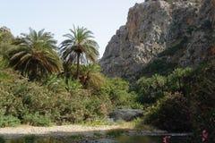 Floresta da palma na Creta Fotos de Stock