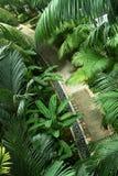 Floresta da passagem Imagens de Stock