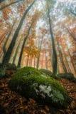 Floresta da perspectiva imagens de stock royalty free