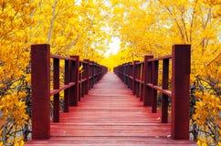 floresta da ponte de madeira & do outono Fotos de Stock Royalty Free