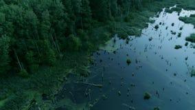 Floresta da preservação da natureza que inunda a água verde filme