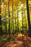 Floresta da queda foto de stock