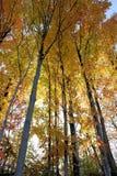 Floresta da queda imagens de stock