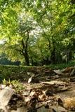 Floresta da queda Fotos de Stock Royalty Free