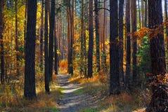 Floresta da queda Fotografia de Stock