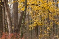 Floresta da queda em Pensilvânia imagem de stock