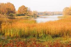 Floresta da queda, névoa, manhã, noite, sol amarelo brilhante Fotos de Stock Royalty Free