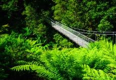 Floresta da samambaia da ponte de suspensão fotografia de stock royalty free