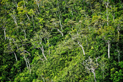 Floresta da vista geral Foto de Stock