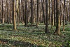 Floresta da zona sujeita a inundações Foto de Stock Royalty Free