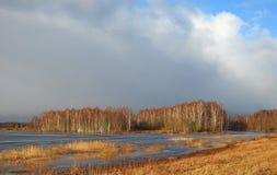 Floresta das árvores de vidoeiro e campo de inundação, Lituânia fotos de stock