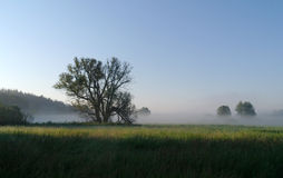 Floresta das árvores na luz solar. Fotografia de Stock Royalty Free