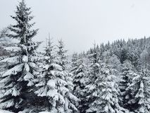 Floresta das coníferas cobertas na neve no inverno Fotografia de Stock Royalty Free