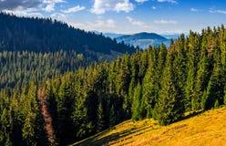 Floresta das coníferas na paisagem clássica do vale da montanha Carpathian imagens de stock royalty free