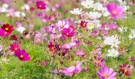 Floresta das flores fotografia de stock royalty free