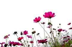 Floresta das flores Imagens de Stock Royalty Free
