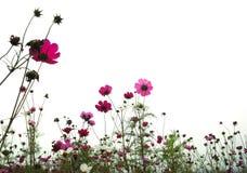 Floresta das flores imagem de stock royalty free