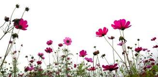 Floresta das flores imagens de stock