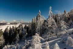 Floresta das montanhas fotografia de stock